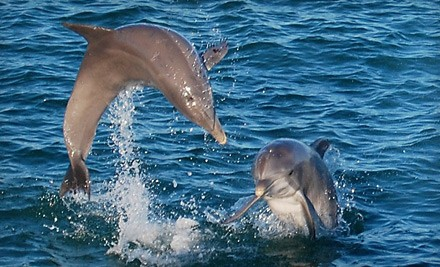 Up to 55% Off Sunset Dolphin Cruise in Destin