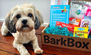 BarkBox mystery box of treats and toys for dogs
