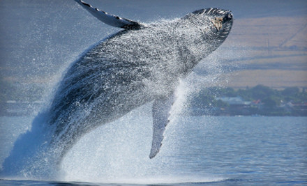 Whale Watching Groupon Special - Longshoremen's Weekend Guide - ILWUCU