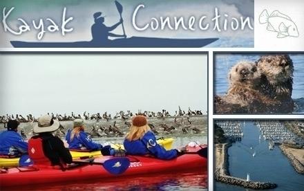 Kayak Connection Santa Cruz Ca Groupon