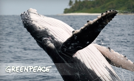 $15 Donation to Greenpeace, Receive $15 Groupon Bucks - Greenpeace in