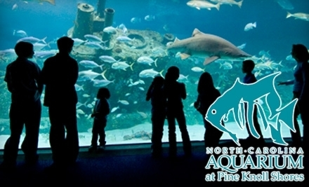 North Carolina Aquarium S 3 Pine Knoll Shores Nc