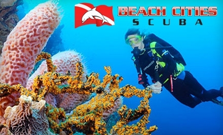 Beach Cities Scuba - Beach Cities Scuba in Cypress