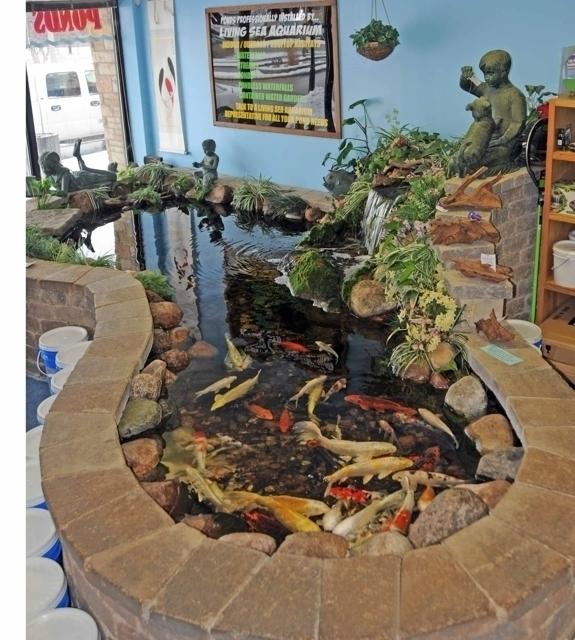 Living Sea Aquarium - Park Ridge, IL