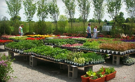 $50 Groupon to Narrow Tree Nursery - Narrow Tree Nursery in Edgerton