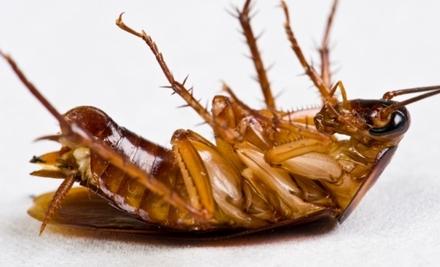 Stop Bugging Me Pest Control: Exterior Pest Treatment - Stop Bugging Me Pest Control in