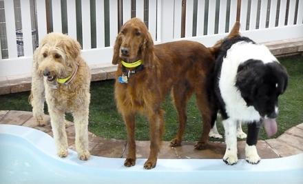 Fenway Bark Stay. Play. Heal.: 1 Night of Pet Boarding  - Fenway Bark Stay. Play. Heal. in Boston