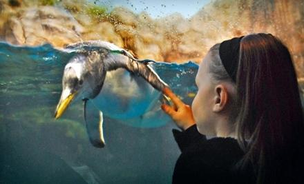 The Living Planet Aquarium Sandy Ut Groupon