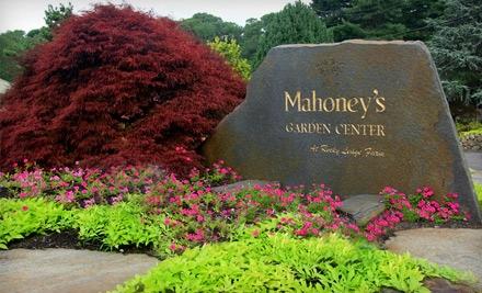 $40 Groupon to Mahoney's Garden Center - Mahoney's Garden Center in East Falmouth