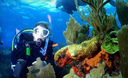 Squalo Divers: Discovery Scuba-Diving Class - Squalo Divers in North Miami Beach