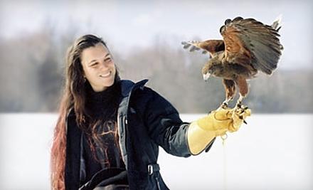 New England Falconry: Weekday Falconry Experience - New England Falconry in Hadley