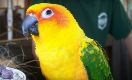 Animal Adventures: 2 General Admissions - Animal Adventures in Bolton