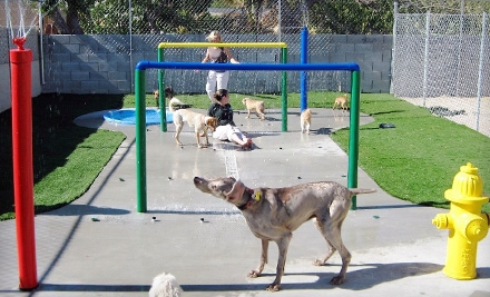 Boarding Package (a $105 value) - Just Like Home Doggie Hotel and Grooming in Las Vegas