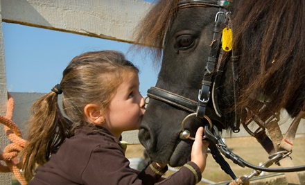 2 Private Horseback-Riding Lessons (a $70 value) - Fairhope Stables in Duluth