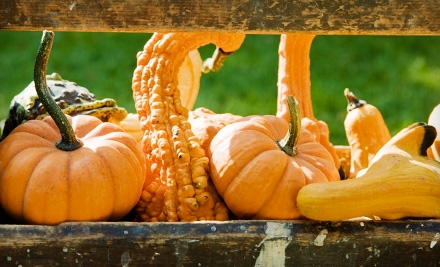 $40 Groupon to The Pumpkin Patch - The Pumpkin Patch in Caledonia