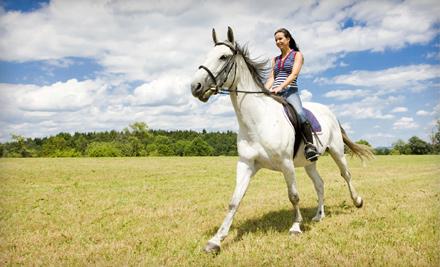 Horse Rides Of Pensacola Pensacola Fl Groupon