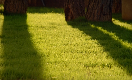 Lawn Aeration or Verti-Cutting (a $150 value) - All Seasons Lawn & Landscaping in