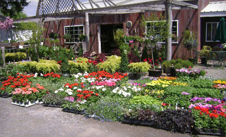 Bristol S Garden Center Victor Ny Groupon