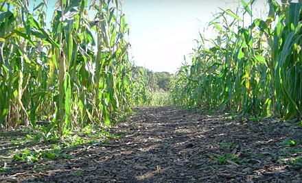 2 Admission Tickets (up to a $16 value) - Bowers Farm Corn Maze in Bloomfield Hills