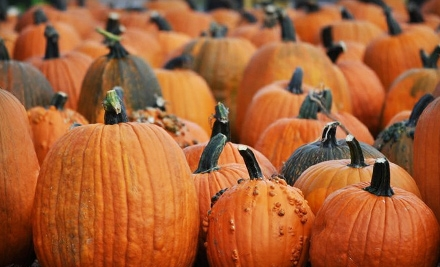 2 Pirate Cove Corn Maze Tickets, Plus Two $5 Pumpkin Gift Credits (a $20 total value) - Jumbo's Pumpkin Patch in Middletown