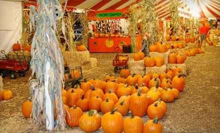 The Pumpkin Factory in Santa Ana: 1 Euro Ball Experience, 3 Carnival Rides, and 1 Petting Zoo Admission ($25 value) - The Pumpkin Factory in Santa Ana