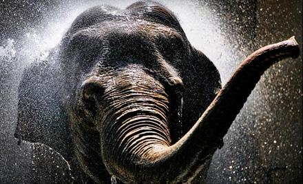 2 Admissions (up to a $26 value) - Denver Zoo in Denver