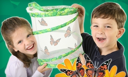 Butterfly Garden Shipped with Live Caterpillars (a $19.99 value) - Insect Lore in