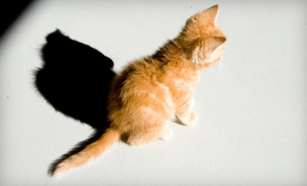 $10 Donation to The Cat Network of Florida - Cat Network of Florida  in