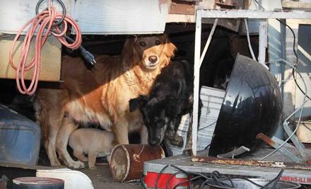 Dog Boarding Site Groupon Com