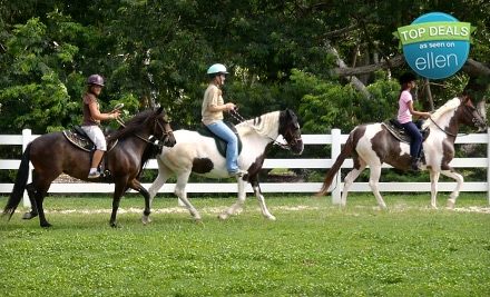 One 1-Hour Private Horseback-Riding Lesson (a $50 value) - White Star Farms in Homestead