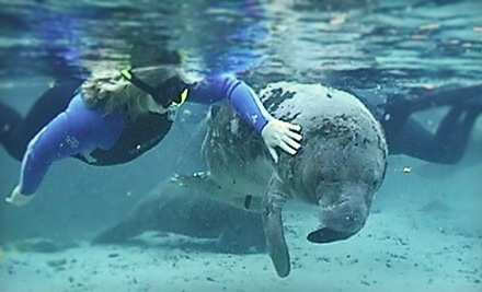 Manatee Dive and Tour for a Child Aged 12 or Younger (a $24.50 value) - Manatee Tour and Dive in Crystal River