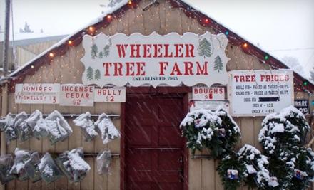 Wheeler Tree Farm - Wheeler Tree Farm in Oregon City