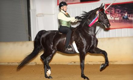 Minnesota Saddlebred Horse Association - Minnesota Saddlebred Horse Association in Delano