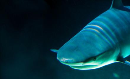 Idaho Aquarium Boise Id Groupon
