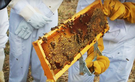 3-Hour Intro to Beekeeping Class for 1 Person and 1 Organic Lip Balm (a $128 value)  - Round Rock Honey in Round Rock