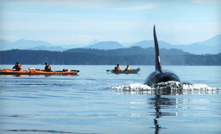 3-Hour Kayak Tour of Point Doughty (up to a $79 value) - Outer Island Expeditions in Eastsound