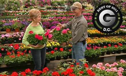 $50 Groupon to Merrifield Garden Center - Merrifield Garden Center in Merrifield