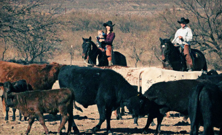 4-Day Cowboy Clinic for 1 Person (a $1,595 value) - Cactus Ridge Ranch in Scottsdale