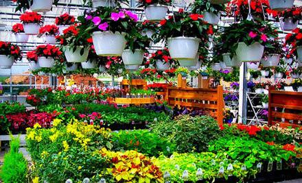 $30 Groupon to McCue Garden Center - McCue Garden Center in Woburn