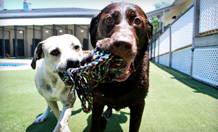 2 Days of Dog Daycare (a $48 value) - Pet Paradise  in Houston