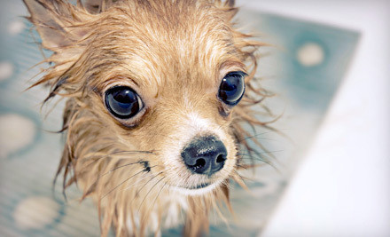 1 Dog-Spa Package, Including Luxurious Bath, Blueberry Facial, Ear Cleaning, Brush Out & Nail Clipping (a $45 value) - Jake's Dog House in Atlantic City