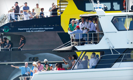 Volvo Ocean Race on Sat., May 19: Full-Day Spectator-Yacht Charter to View the In-Port Race (a $700 value) - Volvo Ocean Race in Miami
