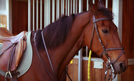 1 One-Hour Horseback-Riding Lesson with Grooming Tutorial (a $70 value) - Herring Brook Farm in Pembroke