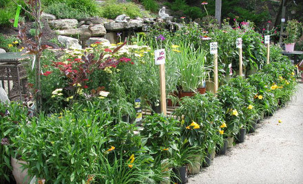 $30 Groupon to Wolf Hill Home and Garden Center - Wolf Hill Home and Garden Center in Ipswich