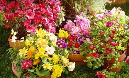 Kansas City: $15 for $30 Worth of Plants, Soil, and Gardening Supplies at Rolling Meadows Landscape and Garden Center in Olathe