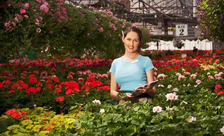 $20 Groupon to Halla Nursery and Garden Center - Halla Nursery and Garden Center in Chaska