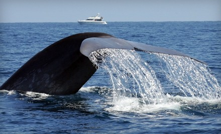 Dana Wharf Whale Watching - Dana Wharf Whale Watching in Dana Point