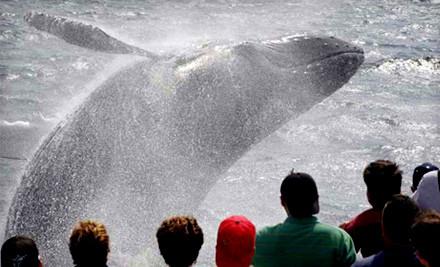 Cape Ann Whale Watch - Cape Ann Whale Watch in Gloucester