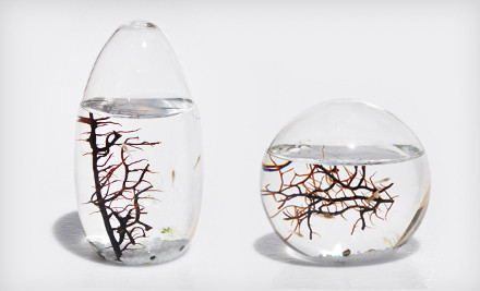 $49 for Small-Pod or Small-Sphere EcoSphere Closed Aquatic Ecosystem