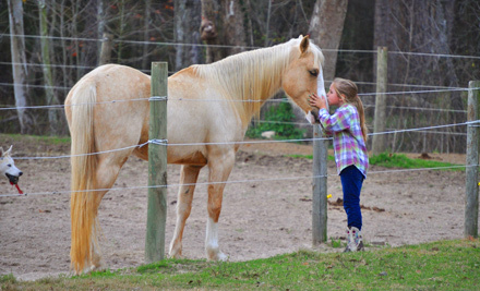 Cypress Trails Equestrian Center Humble Tx Groupon